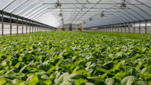 organic-farming-business-powerlinekey