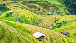 natural-farming-