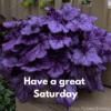 saturday greetings