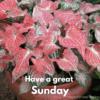 sunday greetings