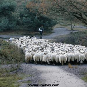 run by other powerlinekey
